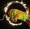 Цирки в Можге